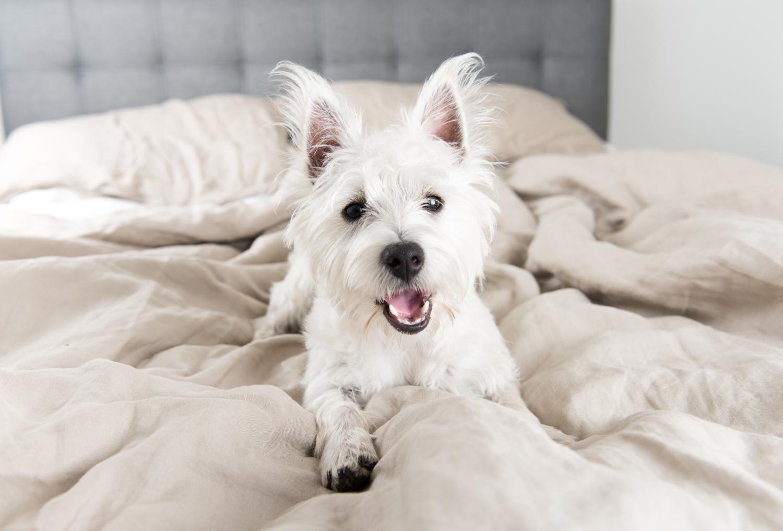 ochraniacz na materac, pies w łóżku
