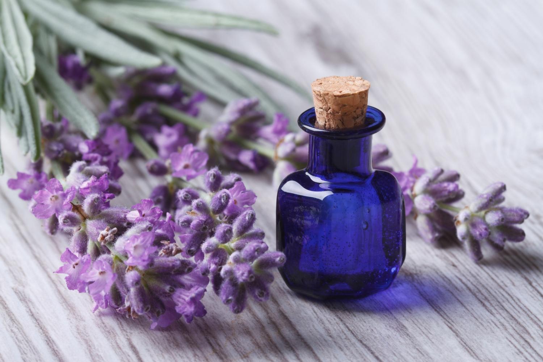olejek i kwiaty lawendy