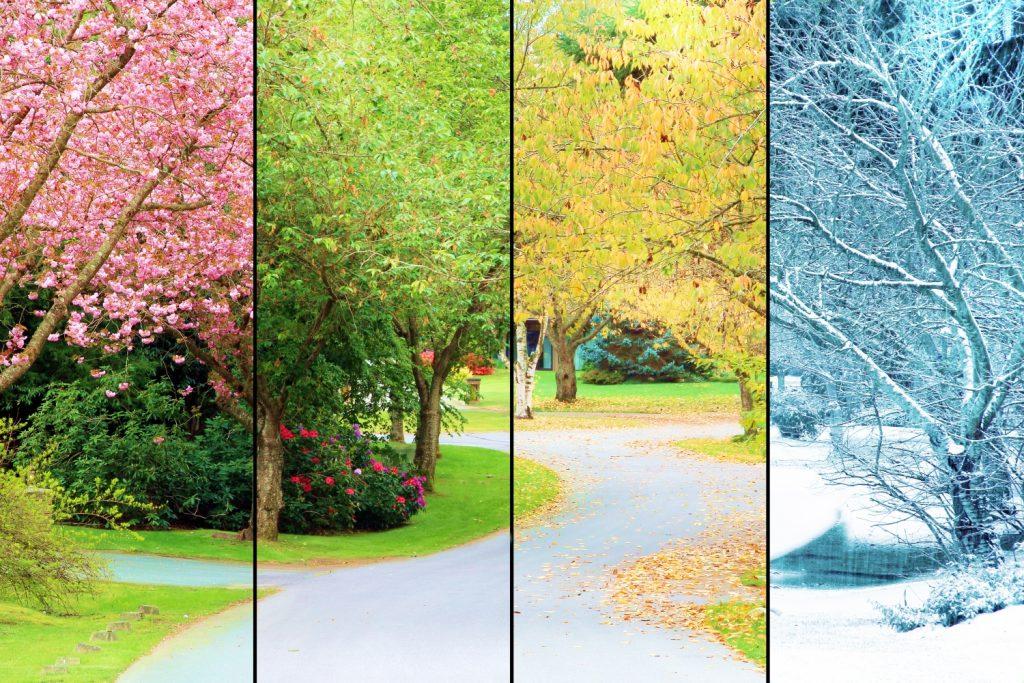 pory roku a sen